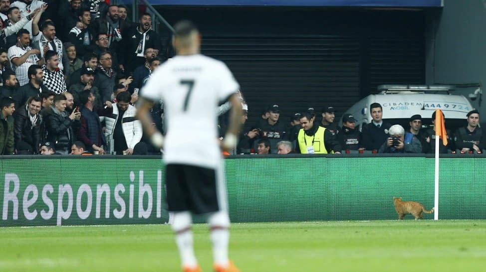Кот прервал матч Бешикташ - Бавария